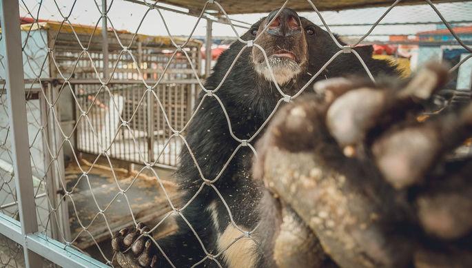 «Не было даже воды»: от чего страдают животные в пандемию