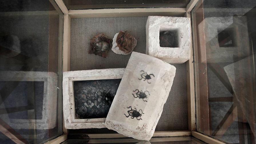 В Египте впервые нашли мумии жуков-скарабеев