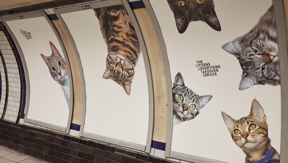 На рекламе только кошки