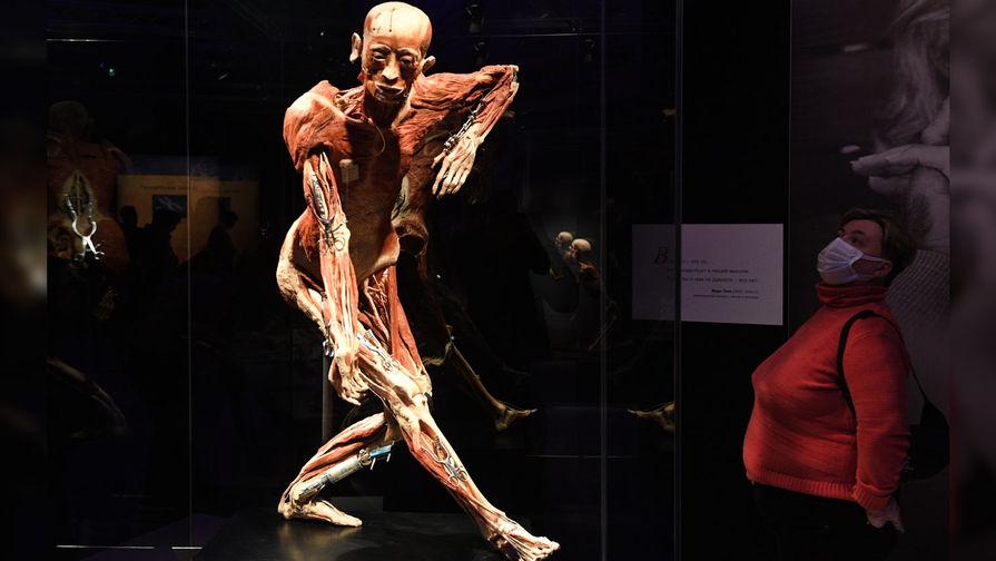 Выставка Body Worlds повысила возрастной ценз до 18