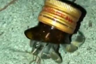 Рак-отшельник в «раковине» из отбитого бутылочного горлышка