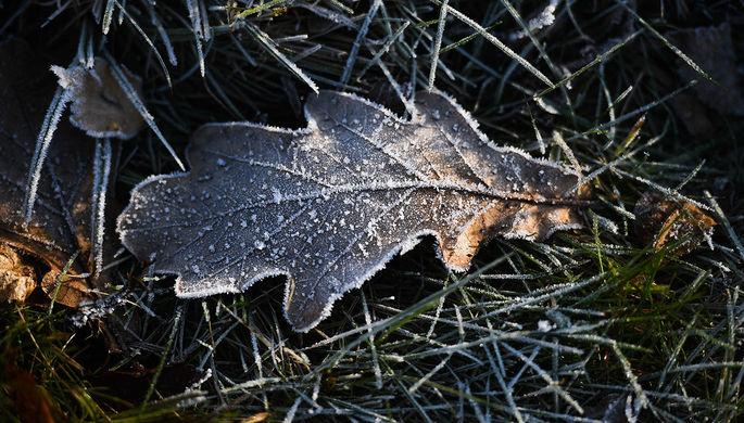 Выходные в снегу: в Москве ударят морозы
