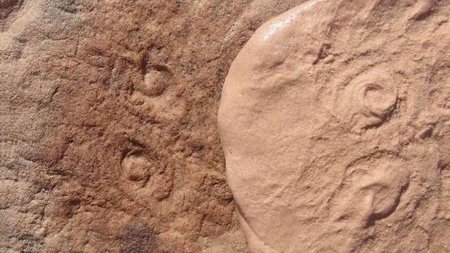Ученые из Калифорнийского университета в Риверсайде обнаружили и описали останки ископаемого животного, обитавшего в океане сотни миллионов лет назад. Ученые решили назвать его Obamus coronatus, отмечая страсть бывшего президента Барака Обамы к науке