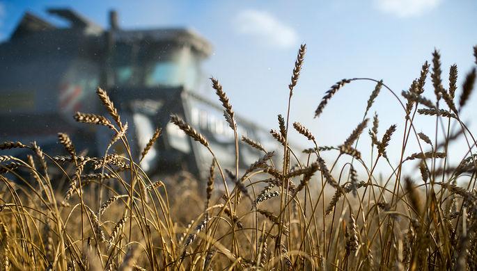 Зерно как гибридное оружие: в США боятся экспорта из России