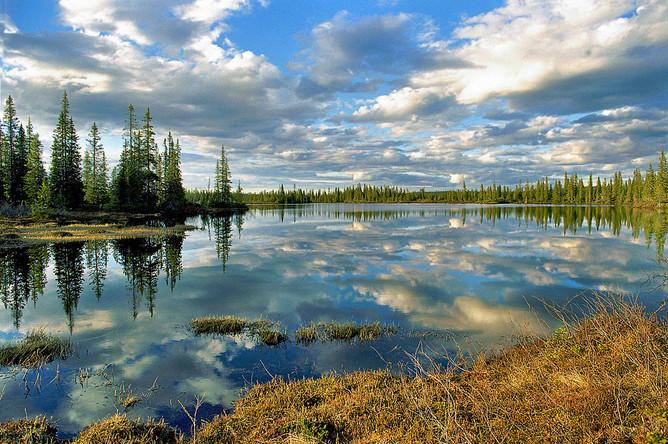 Среди защитных лесов почти каждому из нас известны водоохранные леса. Это леса, сохраняющие гидрологический режим, полноводность рек и ручьев, предотвращающие загрязнения рек и озер, необходимые для поддержания рыбных запасов.