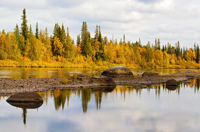 К лесам, выполняющим водоохранные функции, относится несколько категорий защитных лесов, упомянутых в Лесном кодексе. Это водоохранные зоны, запретные полосы лесов вдоль водных объектов, нерестоохранные полосы лесов и ленточные боры.