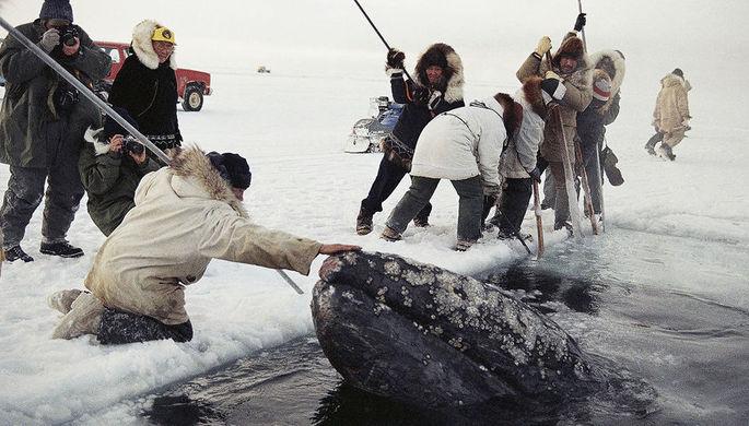«Давайте резать лед»: как советские моряки спасли китов в США