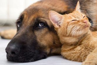 Собачья жизнь: количество питомцев увяжут с площадью дома