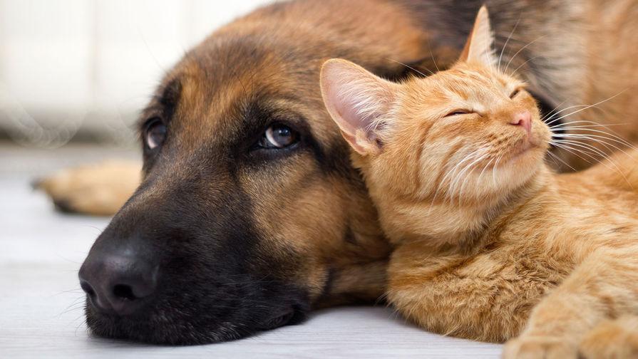 В Москве заработал сервис для виртуального общения с животными из приютов