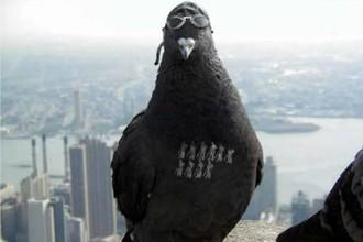 Голуби приготовились атаковать Уимблдон