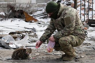 Ополченец ДНР кормит кошку в Углегорске Донецкой области