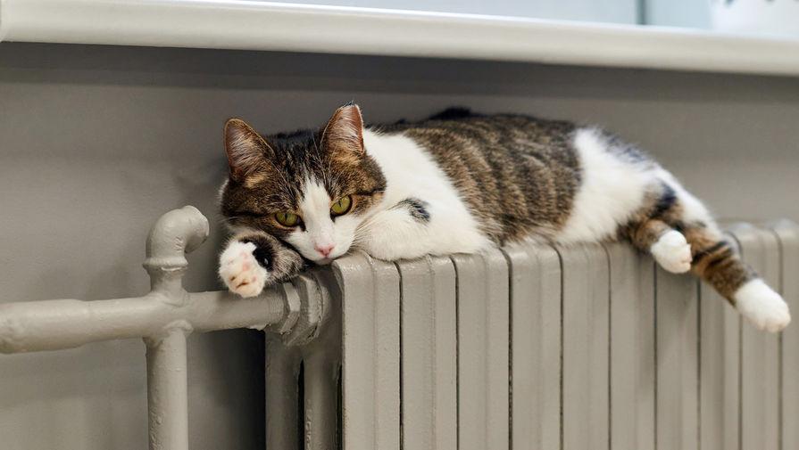 Кот чуть не умер из-за артрита хозяина