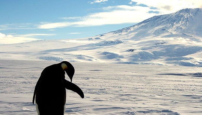В Антарктиде срочно приземлился самолет ВС Аргентины