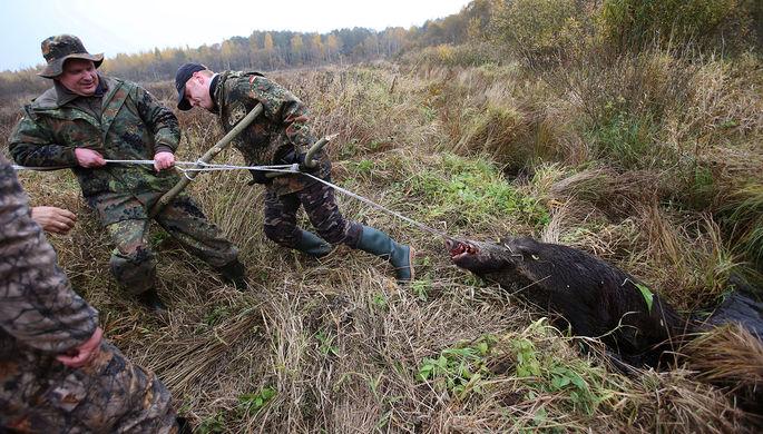 «Голодные люди»: пандемия привела к вспышке браконьерства