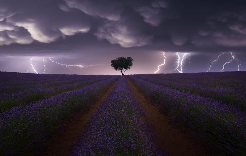 Молнии над полем лаванды в Гвадалахаре, Испания. Категория «Пейзаж»
