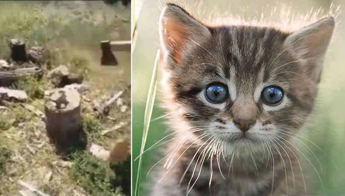 Зарубила котенка: граждане требуют наказать школьницу