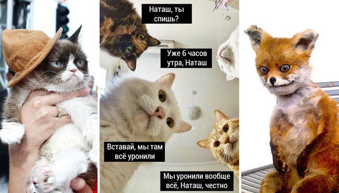 Как заработать на мемах про котиков