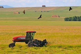 До 2050 года мировое сельское хозяйство столкнется с рядом ограничений