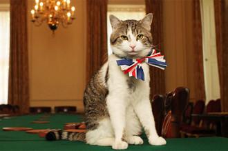 Министерство иностранных дел Великобритании перекрыло вход коту премьер-министра