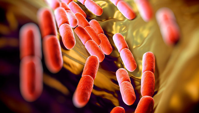 Бифидобактерии под микроскопом